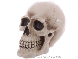 Life Size Realistic Gothic Skull Money Bank/Box